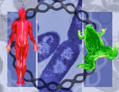 Genes can be moved between species :: DNA from the Beginning