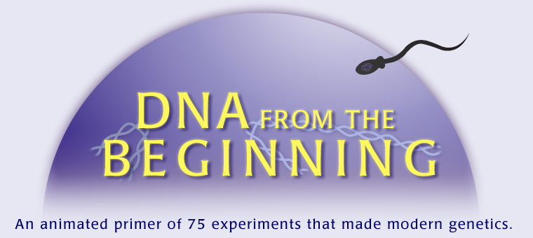 Dna From The Beginning An Animated Primer Of 75 Experiments That